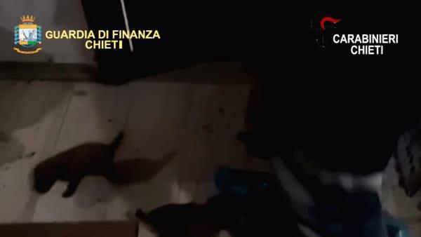 Canile lager: le immagini del salvataggio dei cuccioli [VIDEO]